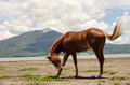 Horse scratching flies chestnut itself and swinging tail to get rid of while grazing freely lakeside Stock Photos