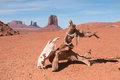 Horse scull hanging on dry log on deserted land with background of sandstone buttes of monument valley arizona usa Stock Image