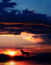 Horse silhouette 3 Royalty Free Stock Photos