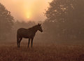 Horse silhouetted against rising sun Royalty Free Stock Photo