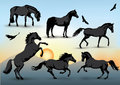 Horse silhouettes set of of standing running and galloping horses and birds with a sunset background Royalty Free Stock Photos