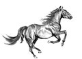 Horse sketch a on paper Royalty Free Stock Photos