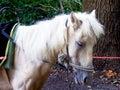 Horse sleeping Royalty Free Stock Photo