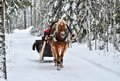 image photo : Horse and sleight in snowy forest