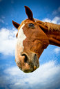 Horse smile portrait with blue skies a beautiful of a in summer Royalty Free Stock Images