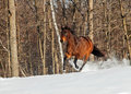 Horse in snow Royalty Free Stock Photo