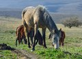 Horse in spring this is on the meadow caucasus nature Stock Photography