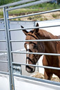 Horse in stable. Royalty Free Stock Photo