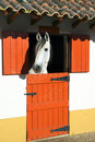 Horse in stable Royalty Free Stock Photo