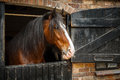 Horse in stable dark brown looking out of Stock Photo