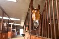 Horse in a stable head of looking over the doors Stock Photo