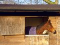 Horse in stable a at the window of a stall a Stock Photo