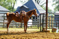 Horse at stables farm yard Royalty Free Stock Photography