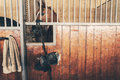 Horse in stall with tack standing wooden of indoor stable Stock Photos