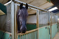 Horse standing manege box Stock Photo
