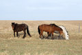 Horse in steppe Stock Photo