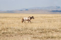 Horse in steppe Royalty Free Stock Photography