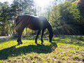 Horse in sun light Stock Images