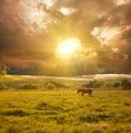 Horse in sunlight idyllic landscape with Stock Photography