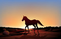 A horse in a sunset scenery at the desert illustration of Royalty Free Stock Images