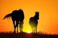 Horse at sunset Royalty Free Stock Photo