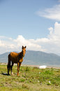 Horse tethered at lakeside skinny tied with rope lake chapala Royalty Free Stock Photos