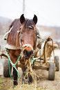 Horse and trailer Royalty Free Stock Photo