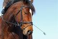 Horse training Royalty Free Stock Photos