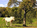 Horse Under apple Tree Stock Images