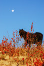 Horse under moon Royalty Free Stock Photography