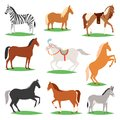 Horse vector animal of horse-breeding or equestrian and horsey or equine stallion illustration animalistic horsy set of