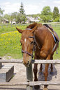 Horse in the village Royalty Free Stock Photography