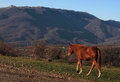 Horse walking in mountains chestnut on path Royalty Free Stock Photos