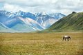 Horse walking in mountains tien shan kyrgyzstan Stock Photos