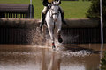 Horse at water jump 3 Royalty Free Stock Photo