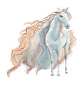 Horse watercolor painting on white background Royalty Free Stock Image