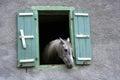 Horse window Royalty Free Stock Photo