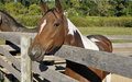 Horse by wood fence Stock Photography