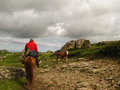 Horseback riding in the high mountain countryside Royalty Free Stock Photo
