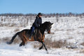 Horseback riding in winter field Stock Image