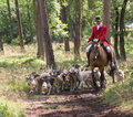 Horseman with English Pointer dogs in action Royalty Free Stock Photo
