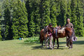 Horseman with horses attending to and taking care of his ponies and Royalty Free Stock Photos