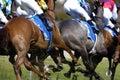 Horserace run 01 Stock Photography