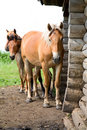 The horses in an abandoned house Royalty Free Stock Photography