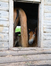 The horses in an abandoned house Royalty Free Stock Photo