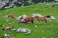 Horses in alpen land Stock Photo