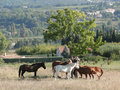 Horses in autumn meadow Royalty Free Stock Photo