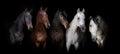 Horses on black Royalty Free Stock Photo