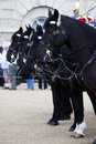 Horses from the British Household Cavalry Royalty Free Stock Photo