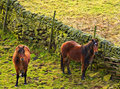 Horses browsing in the fields. Royalty Free Stock Images